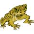 QLD Cane Toads